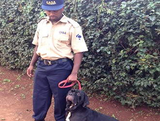 Dog Patrols